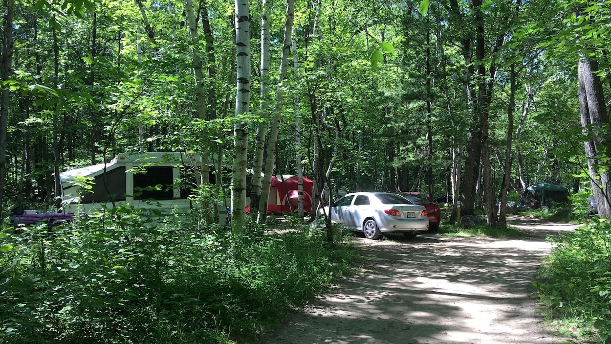 Une tente-roulotte est stationnée à proximité de véhicules dans une forêt.