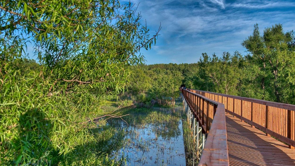 La passerelle du parc écomaritime de l'Anse-du-Port, à Nicolet, dans sa portion qui traverse un marais.