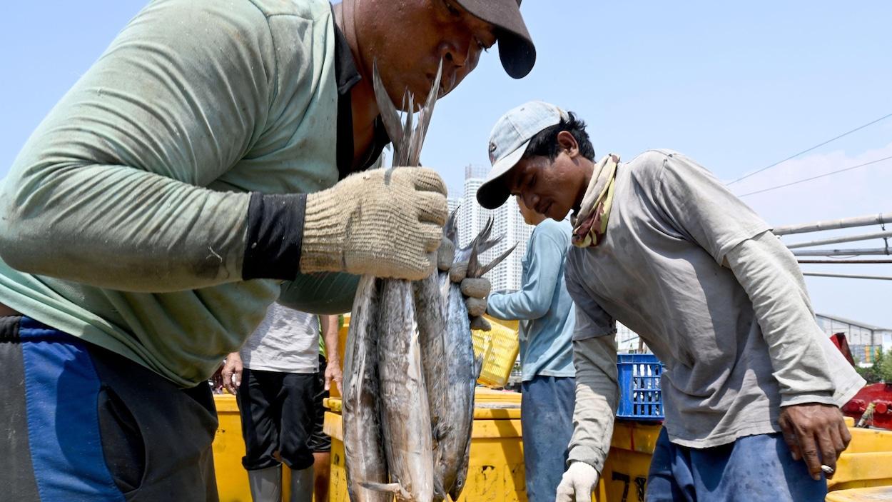 Des pêcheurs déposent des poissons dans des bacs sur un bateau.