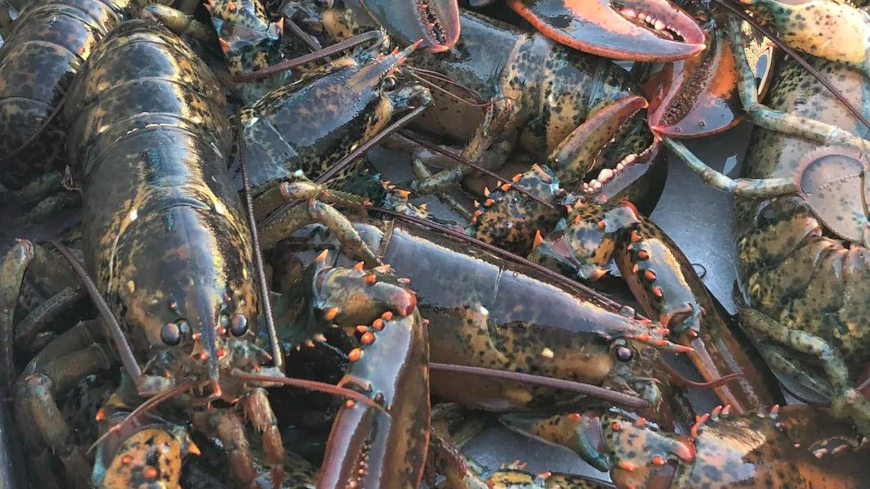 Les exportations canadiennes de homard aux États-Unis représentent plus de deux milliards de dollars par année