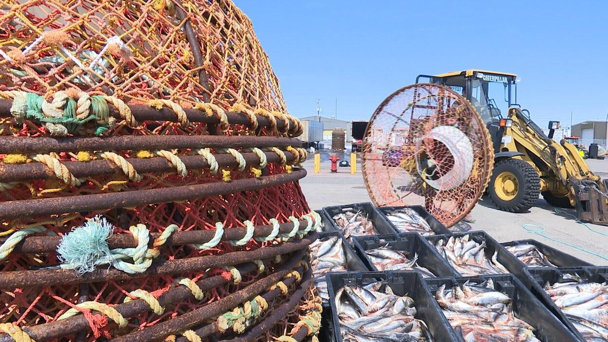 Des casiers de crabe au quai de Sept-Îles.