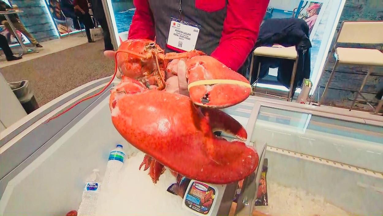 Un pêcheur de homard de Tignish, à l'Île-du-Prince-Édouard, présente un gros homard à l'exposition de fruits de mer de Boston.