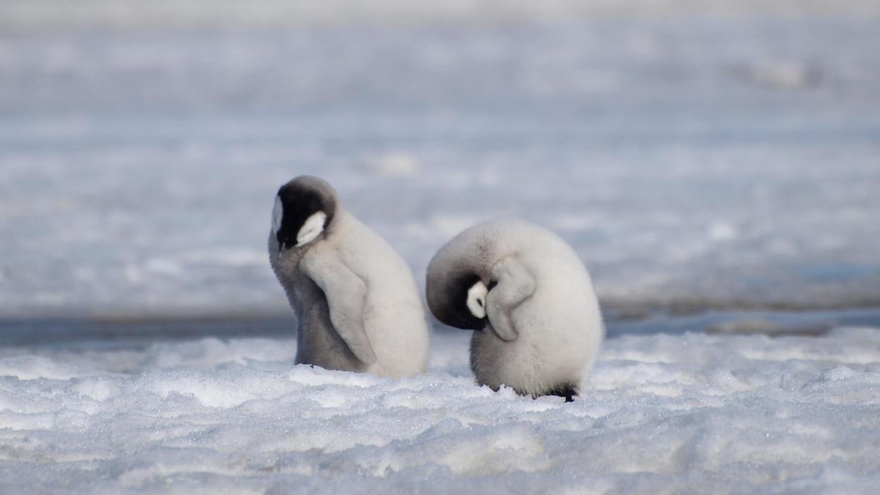 Ils sont sur la banquise à Halley Bay en Antarctique.