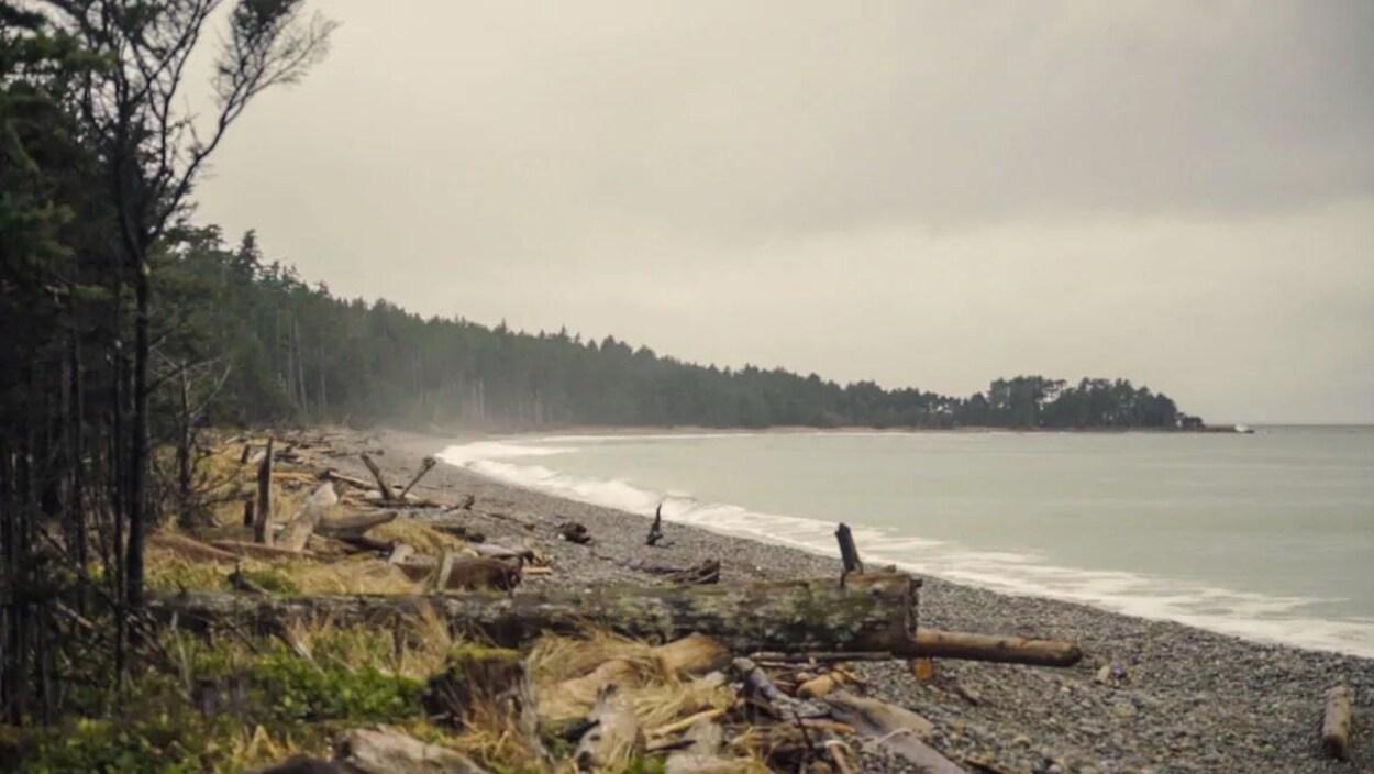 Plage de roches bordée par les arbres sur l'archipel Haida Gwaii