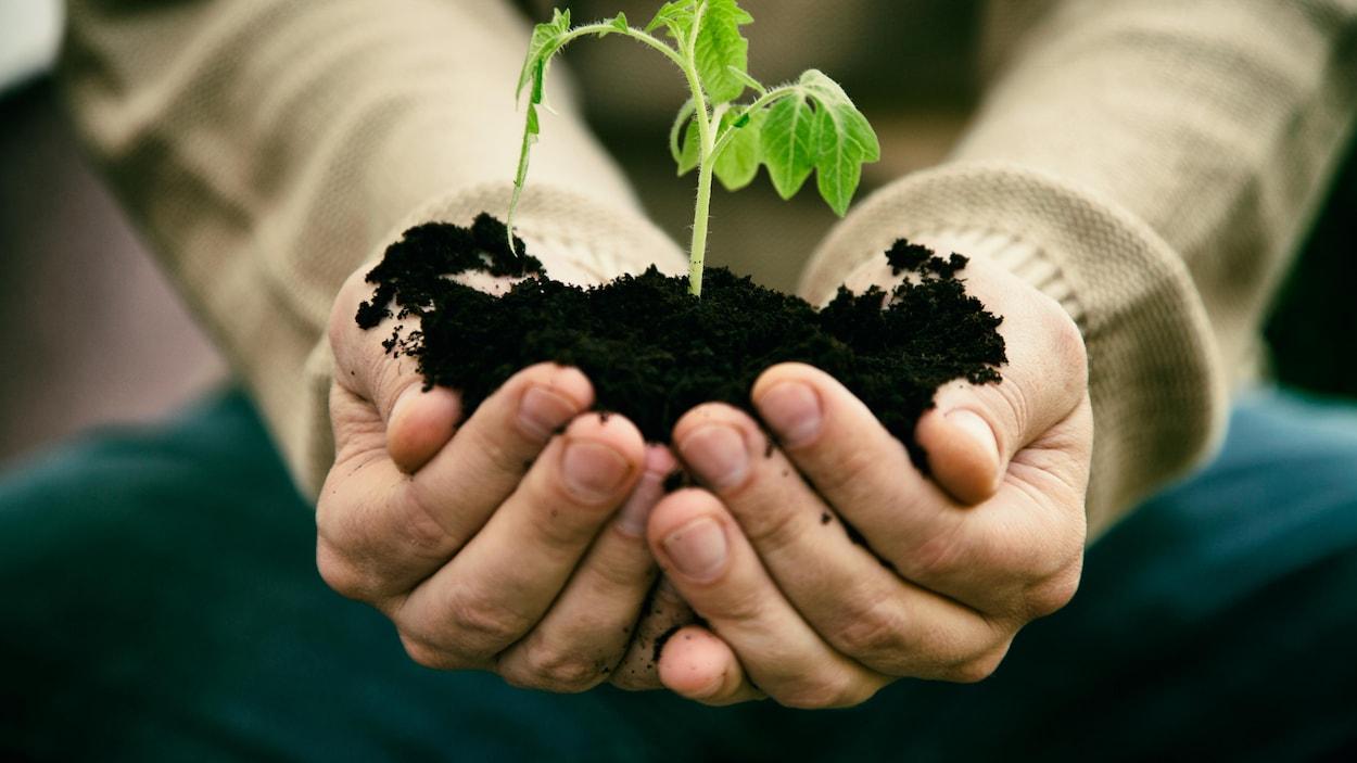 Un gros plan sur les mains d'une personne qui tient une pousse d'arbre entre ses mains avec de la terre.