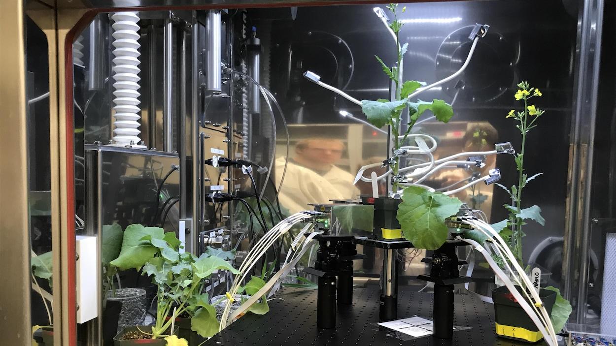 Le nouvel outil permet de voir la progression des plantes grâce à un système d'imagerie.