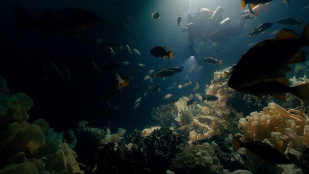 Une plongeuse sous l'eau, près d'un récif.