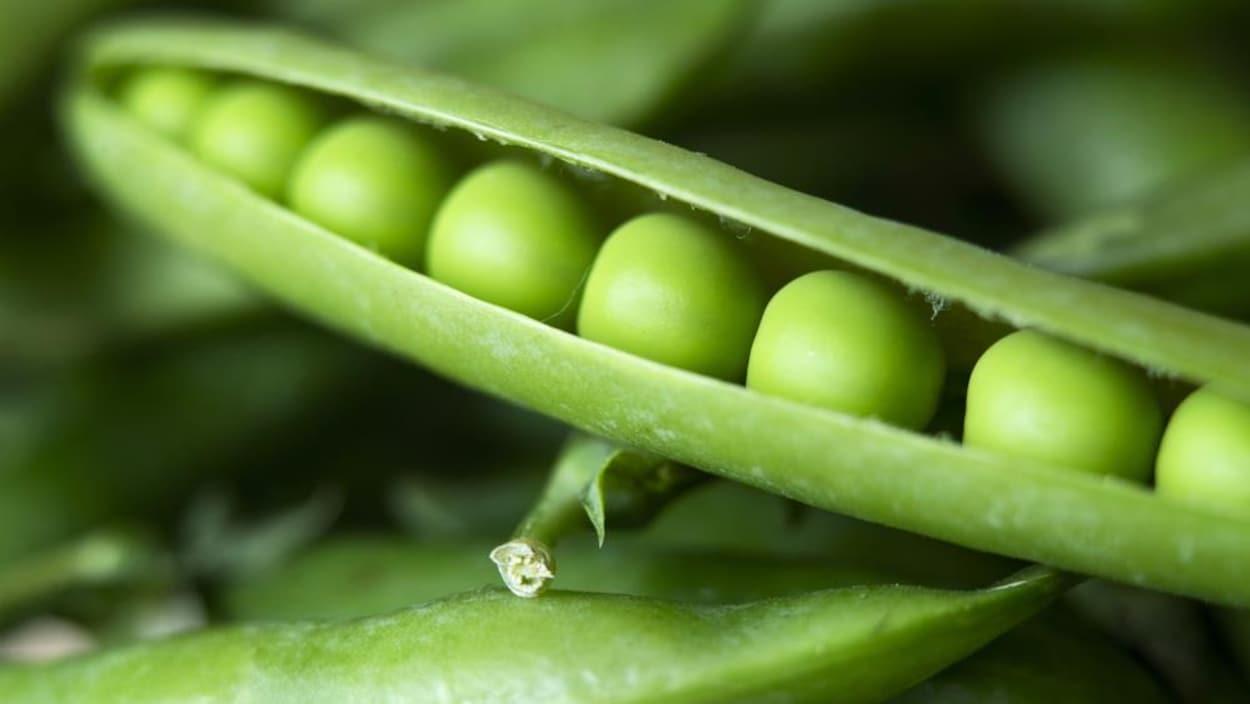 des pois verts