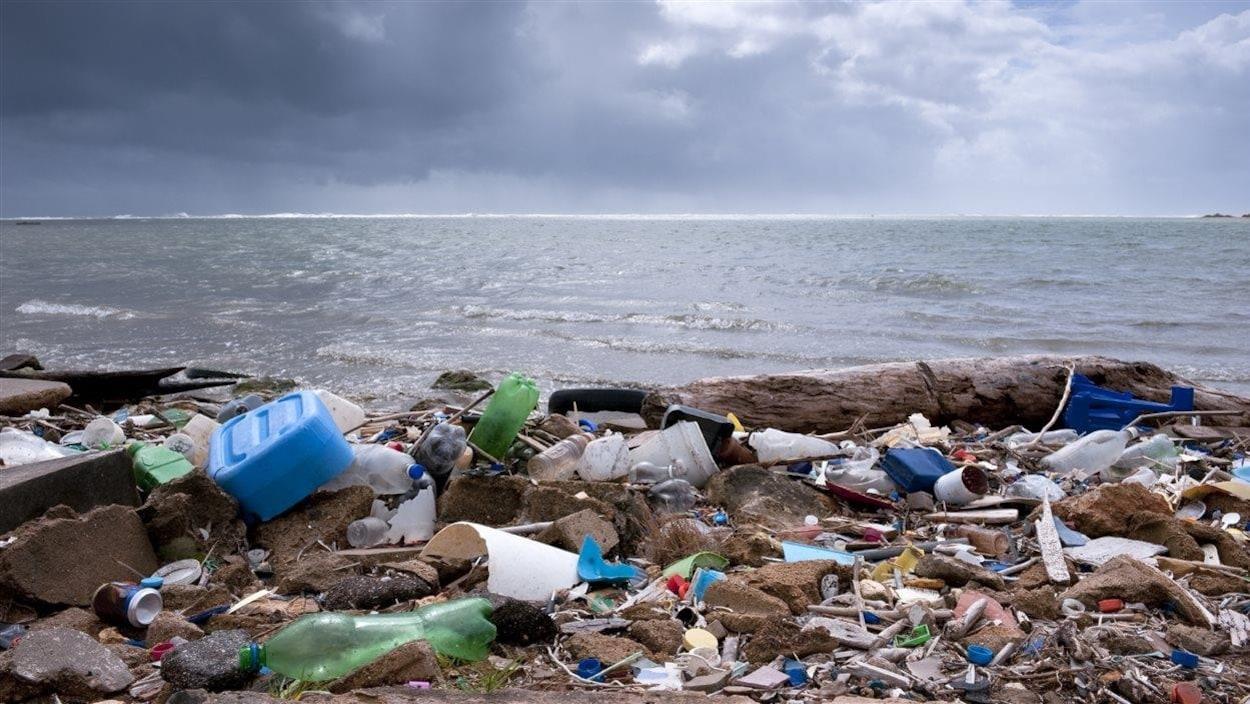 Des déchets échoués sur une plage en bordure de mer