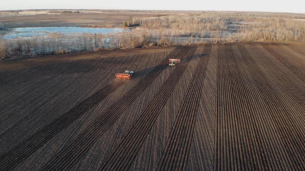 Vue aérienne de deux tracteurs qui ensemencent un champ de pomme de terre dans un champ.