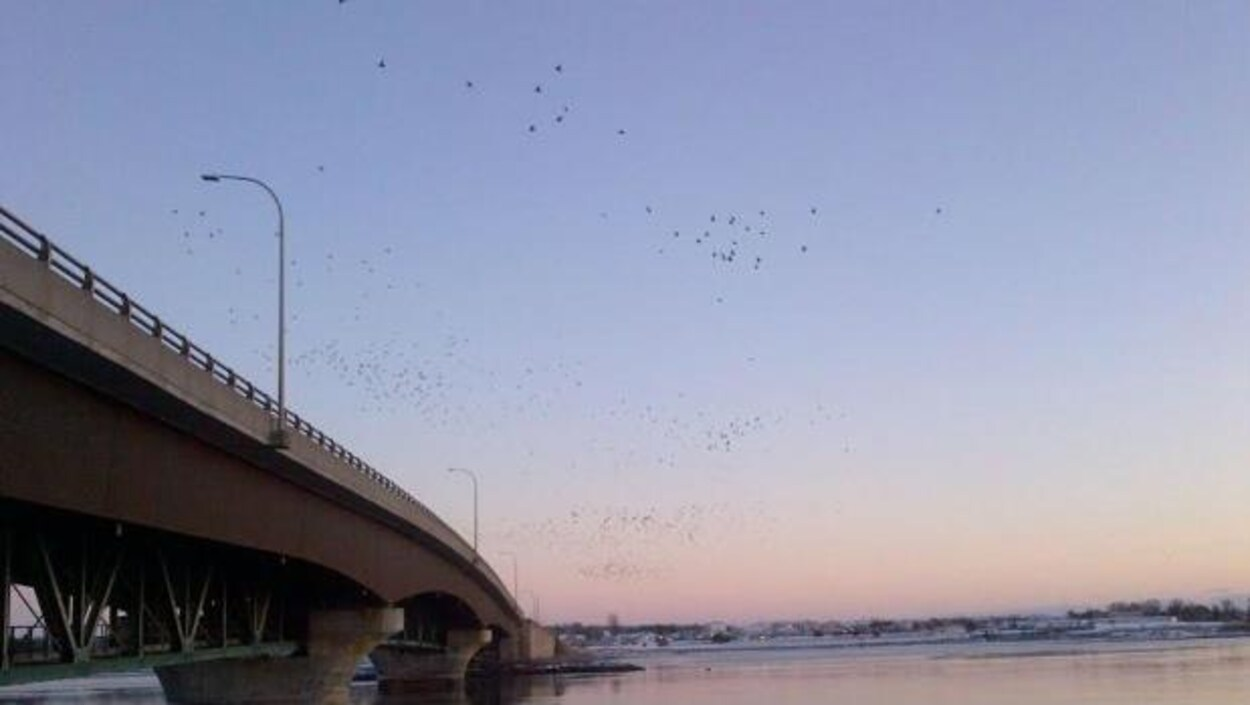 Le pont Hillsborough entre Charlottetown et Stratford, à l'Île-du-Prince-Édouard.