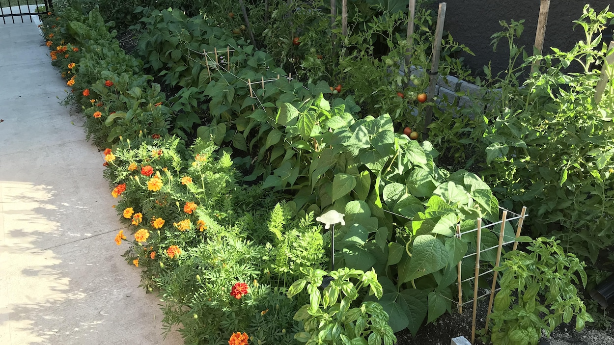 Le potager de Colombe Fortin