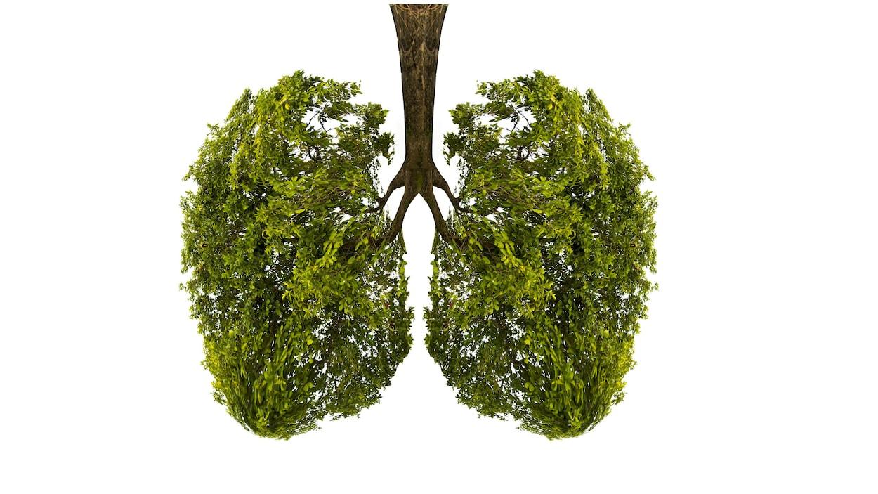 Illustration d'un arbre prenant la forme de poumons humains.