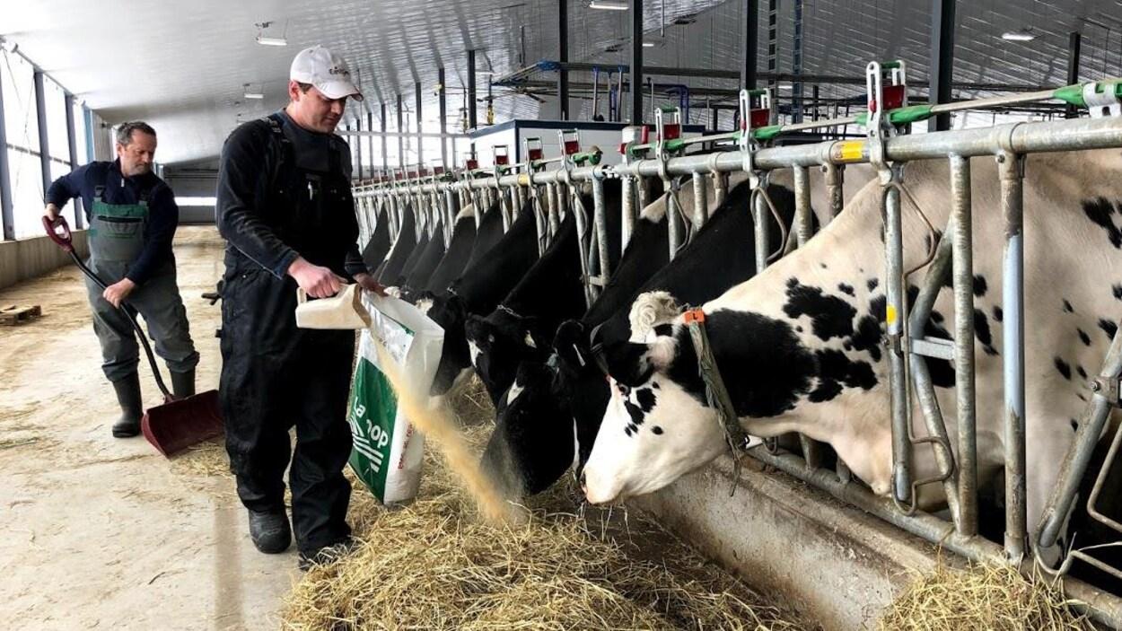 Jasmin Benoit et son père Gérald nourrissant les vaches sur leur ferme.