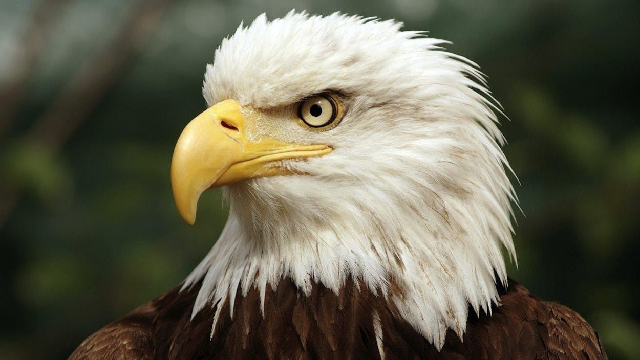 L'administration Trump affaiblit une loi sur les espèces menacées — Etats-Unis