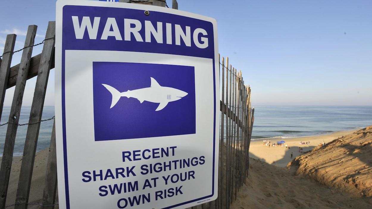 Un homme de 61 ans survit à une attaque de requin — Massachusetts