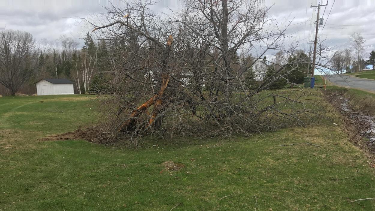 Un arbre sur un terrain dégagé près de la route.