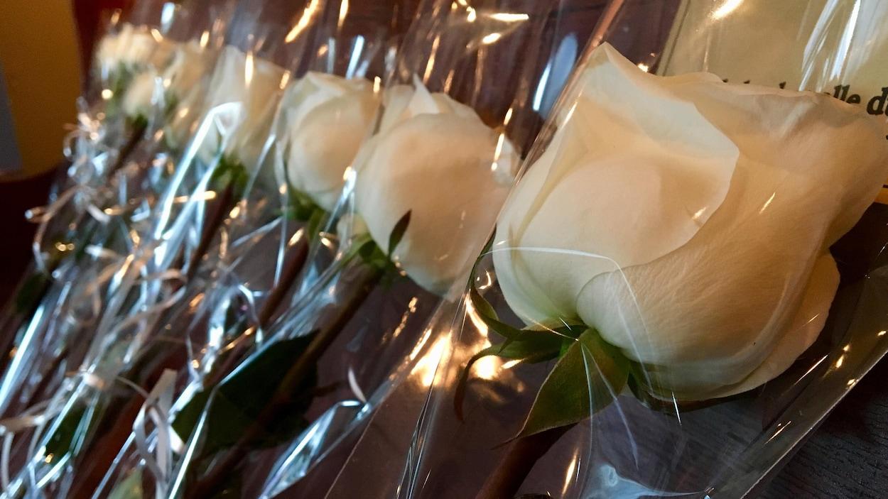 Un gros plan sur des roses blanches emballées dans du plastique.
