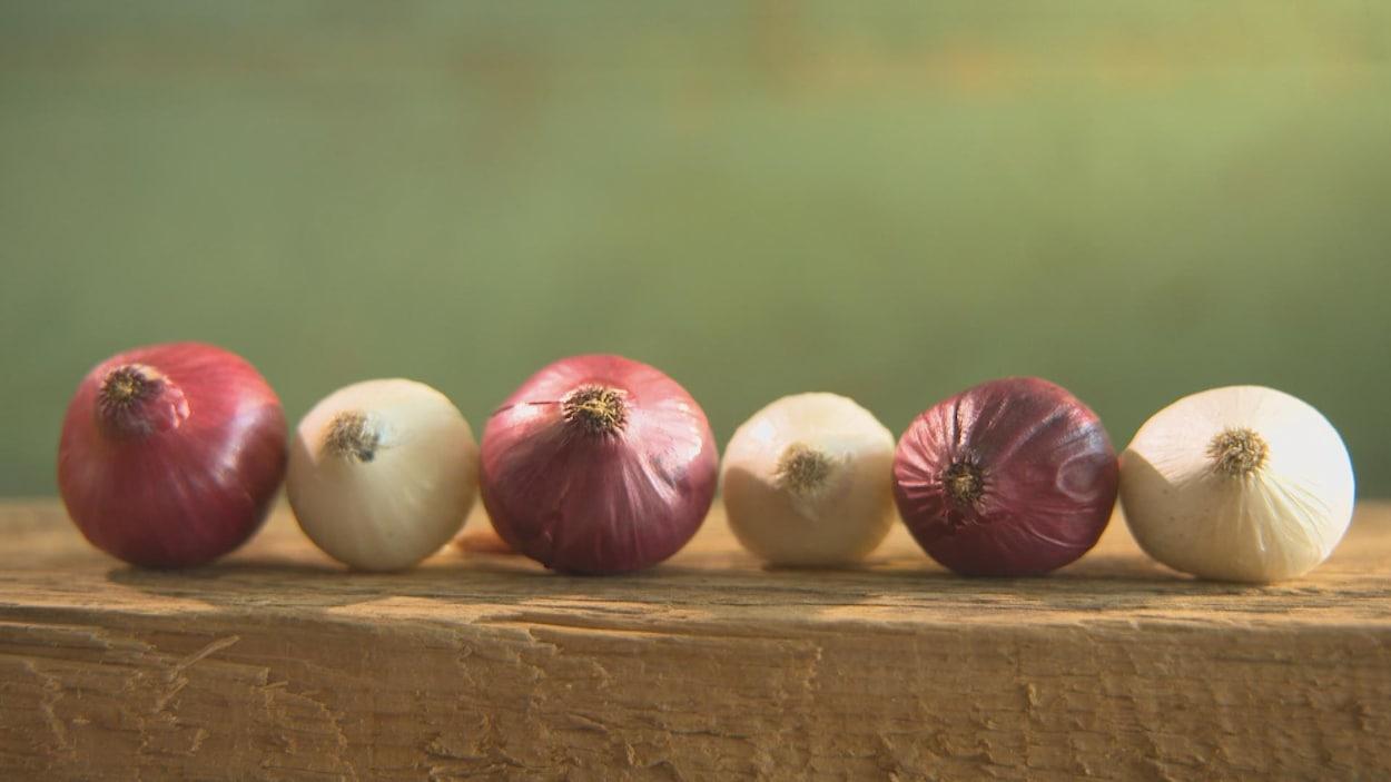 Des oignons rouges et blancs sur une planche de bois.