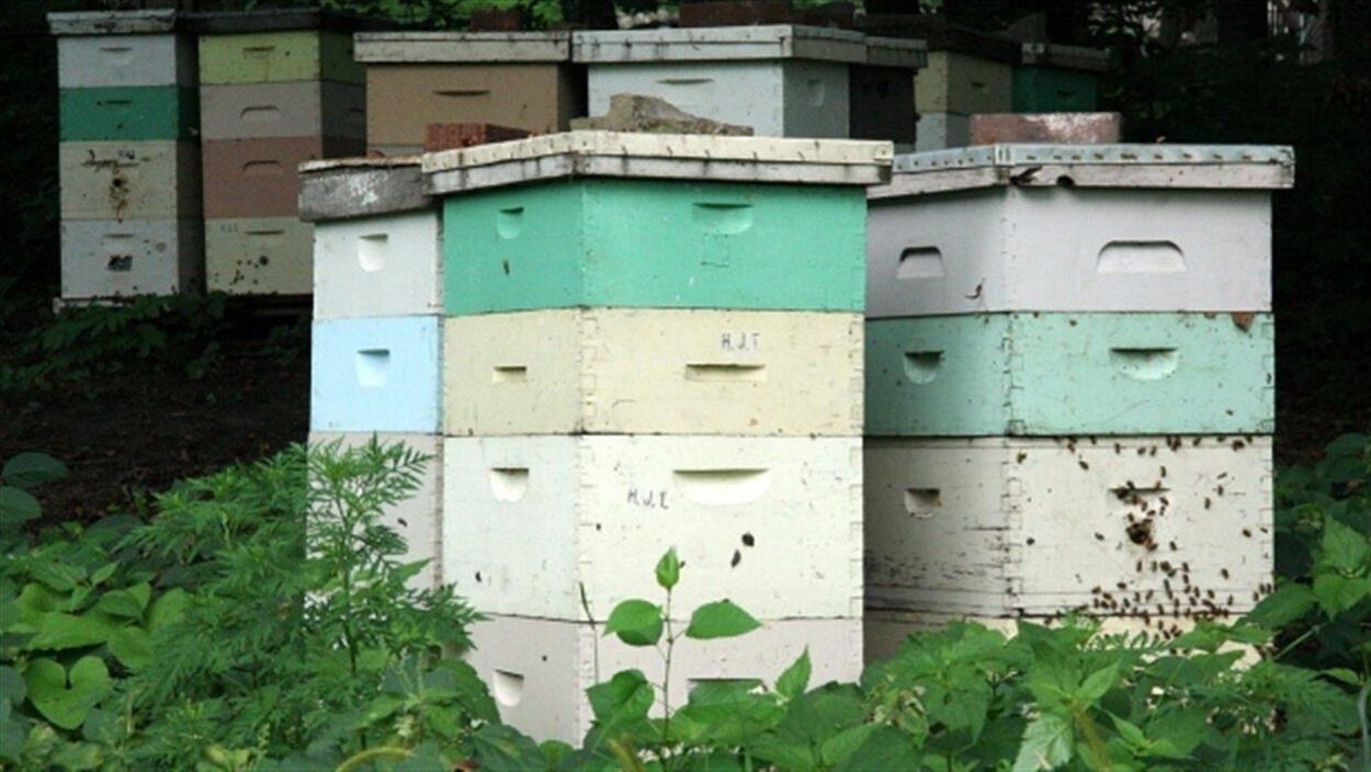 Une ruche peut contenir des milliers d'abeilles et peser plus de 100 kg.
