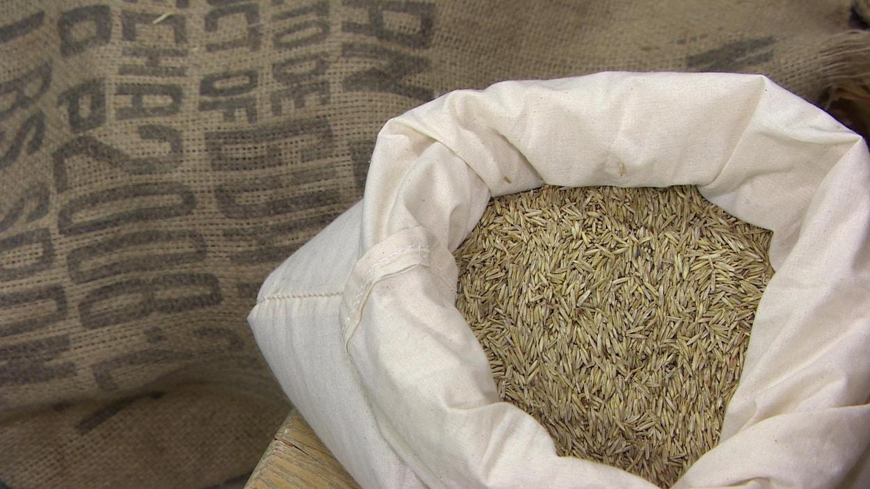 Un sac rempli de grains de Kernza.