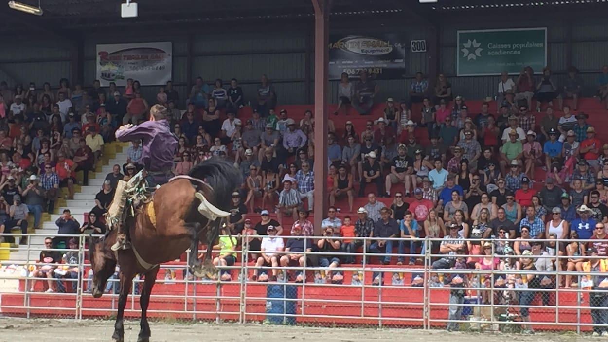 Un cheval tente de désarçonner un cowboy qui s'accroche de son mieux.