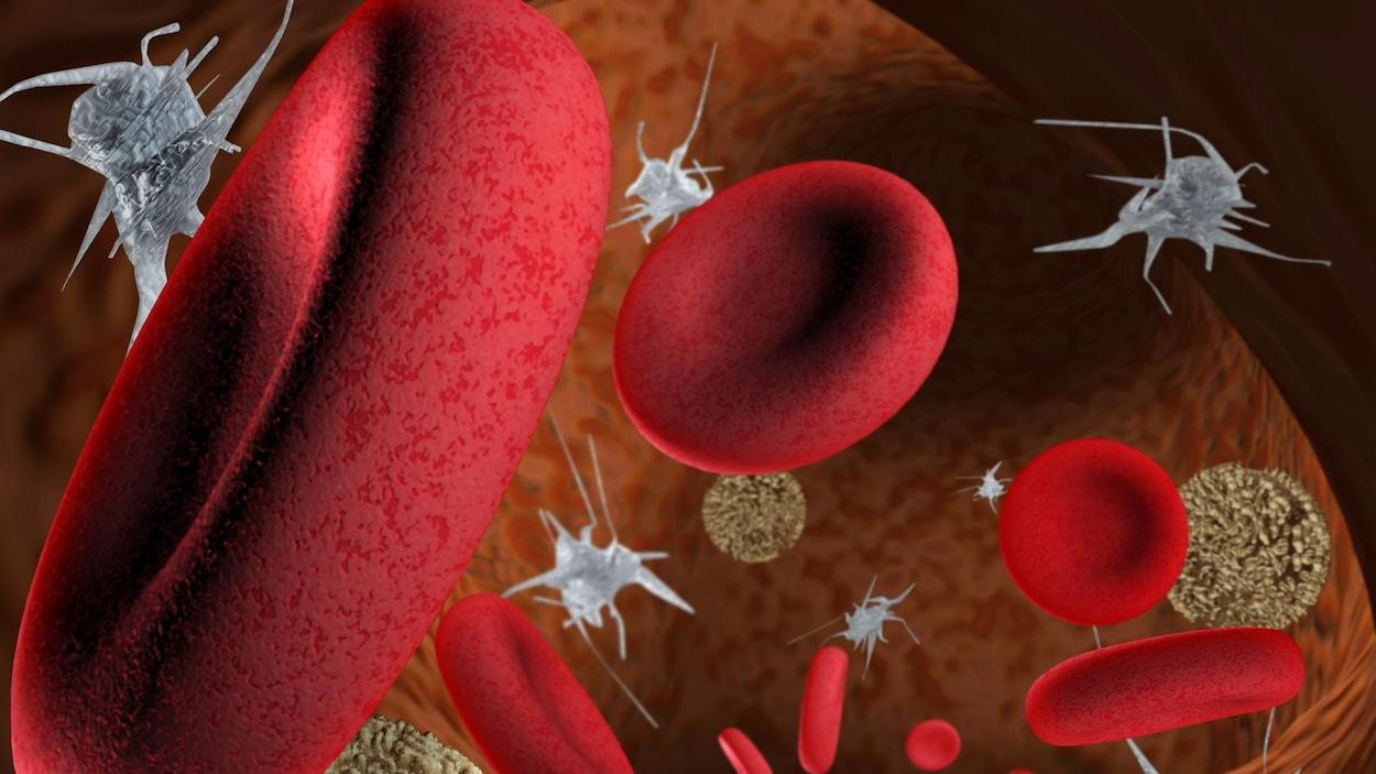 Représentation du sang humain