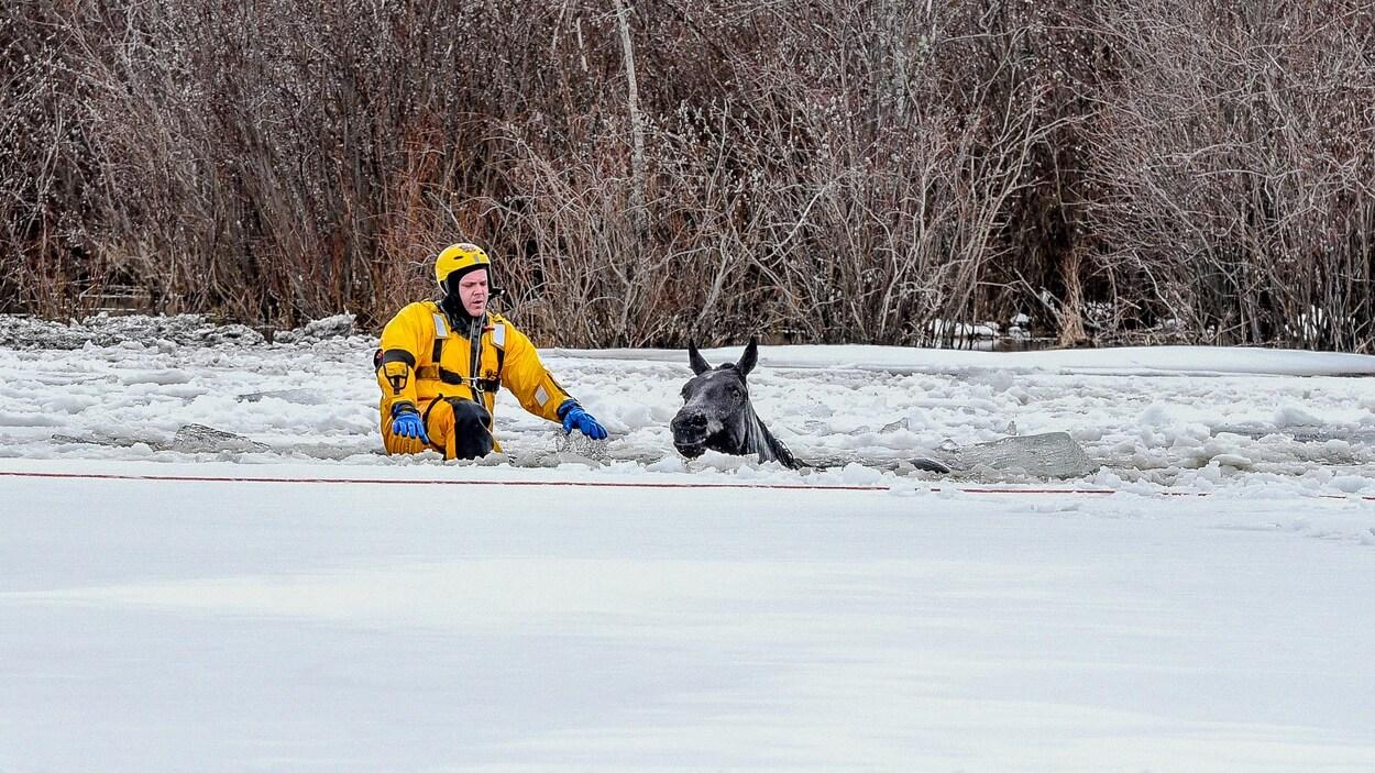 Un pompier tente de sauver un cheval prisonnier des glaces près de Grande Prairie en Alberta.