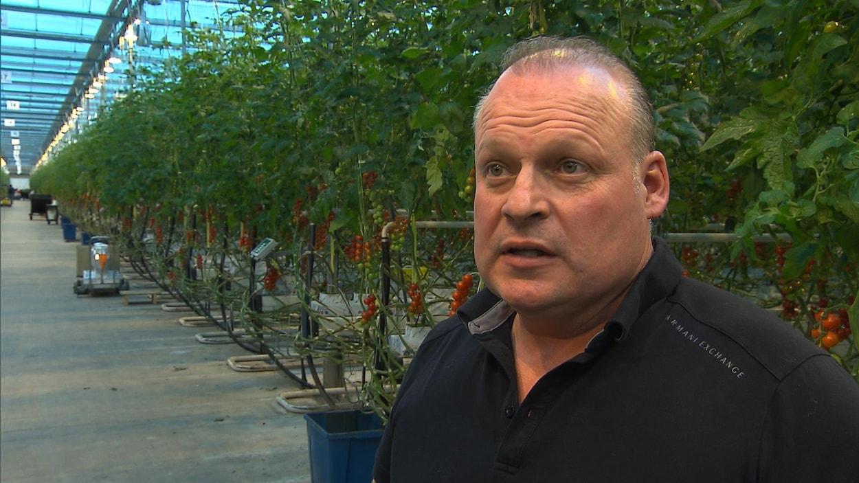 Stéphane Roy devant des rangées de plants de tomates.