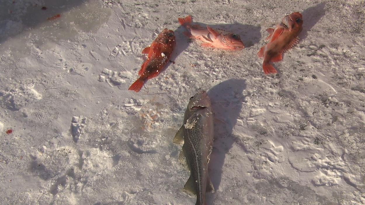 Quelques poissons pêchés samedi