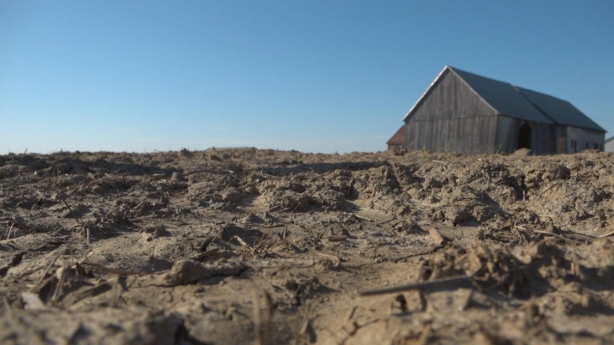 Vue de près du sol d'un champ labouré sans culture agricole, et une vieille grange en arrière-plan.