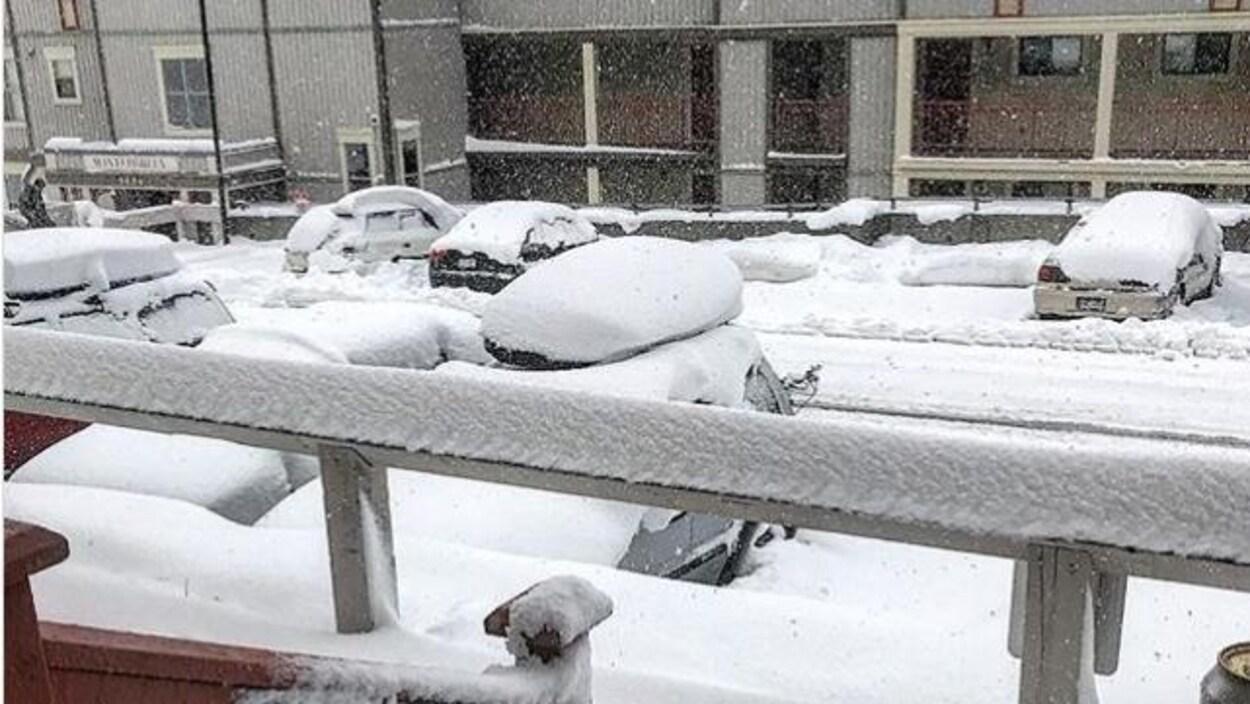 De la neige tombe abondamment sur le sol recouvert déjà d'un épais duvet blanc.