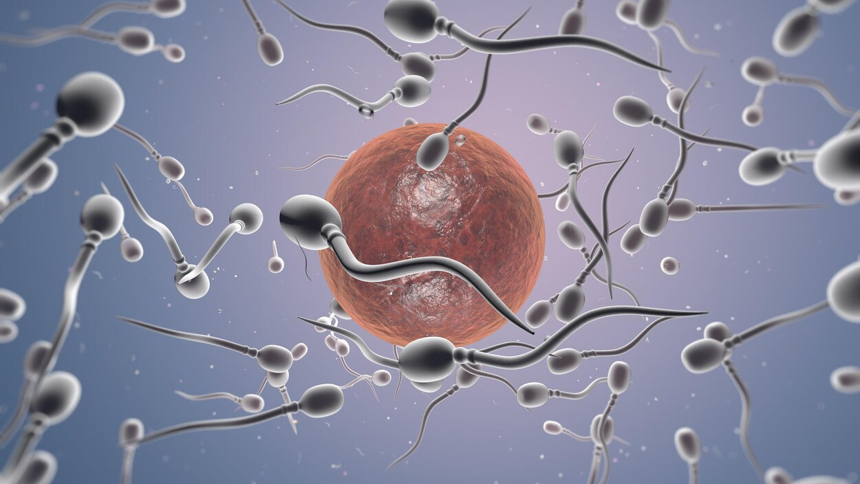 Représentation artistique de spermatozoïdes et d'un ovule.