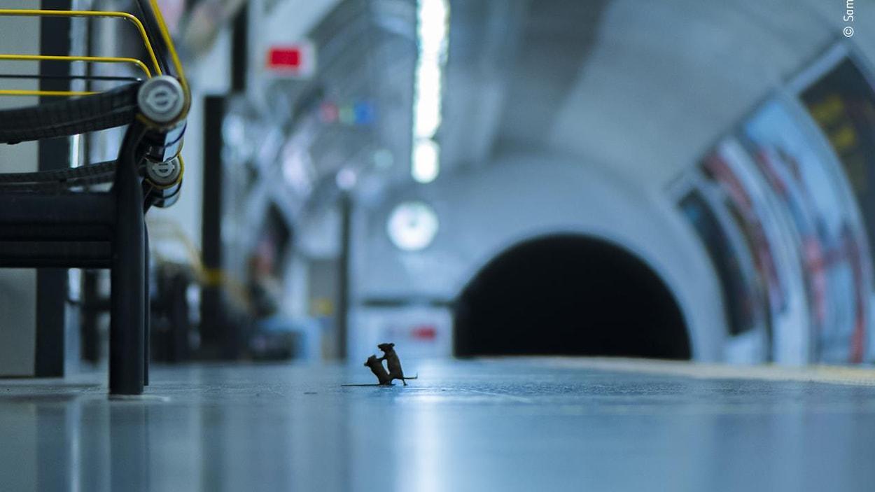 Un duel de souris dans le métro reçoit le prix du public