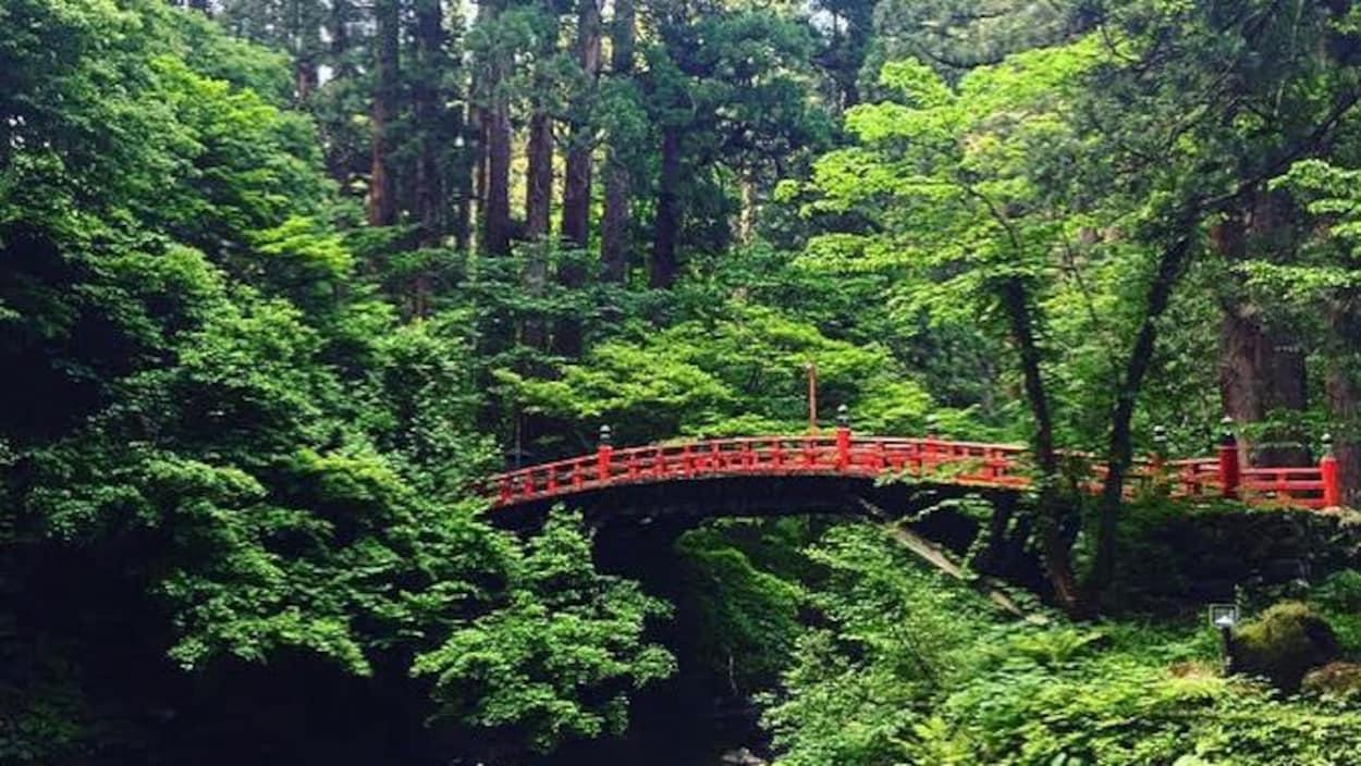 Un pont japonais rouge dans la verdure d'une forêt.
