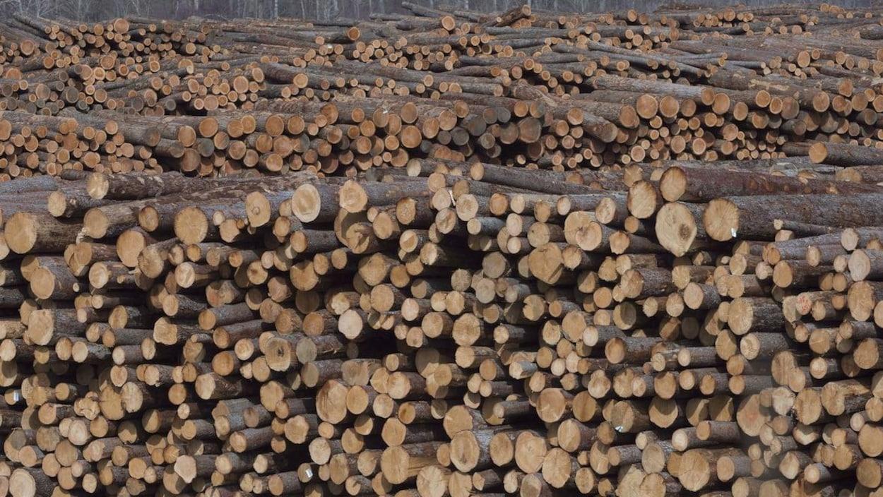 Des centaines de troncs d'arbres sont empilés les uns sur les autres dans la scierie de Heffley Creek appartenant à Tolko.
