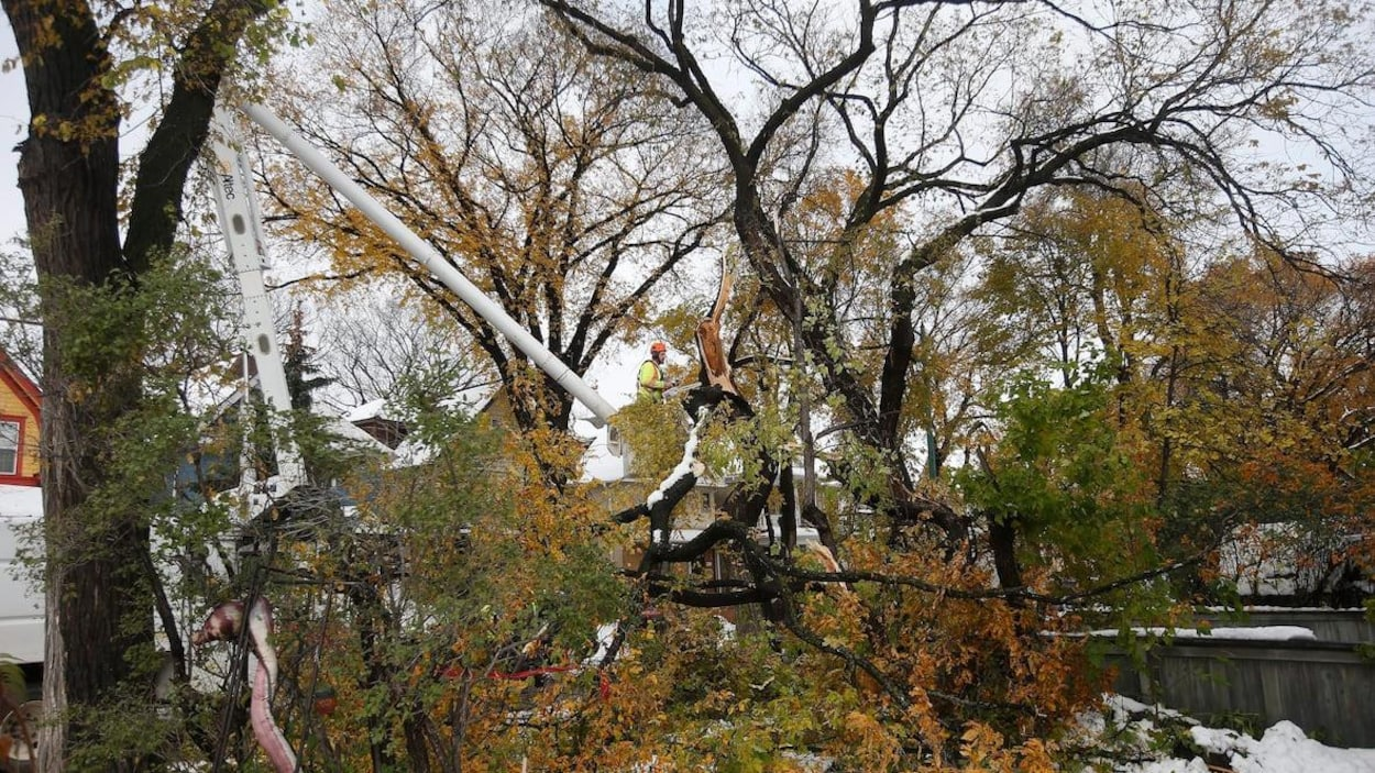 Un travailleur dans une nacelle coupe les branches d'un arbre à la tronçonneuse.