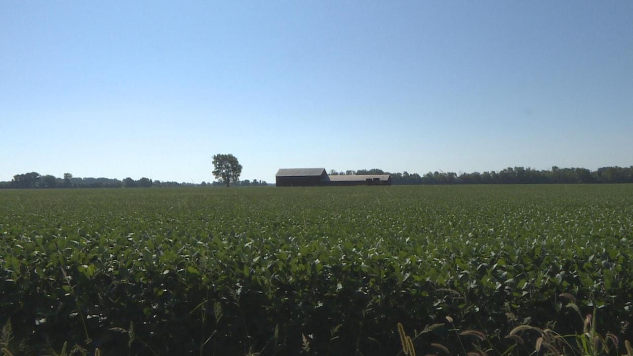 Un vaste champs avec une ferme au milieu du terrain.