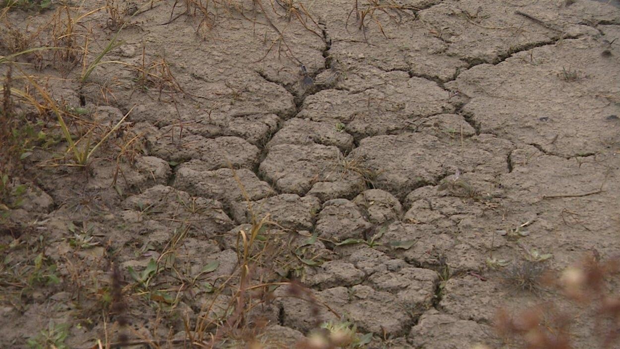 Les sécheresses plus importantes seront un défi de taille à relever pour les agriculteurs de la Saskatchewan.