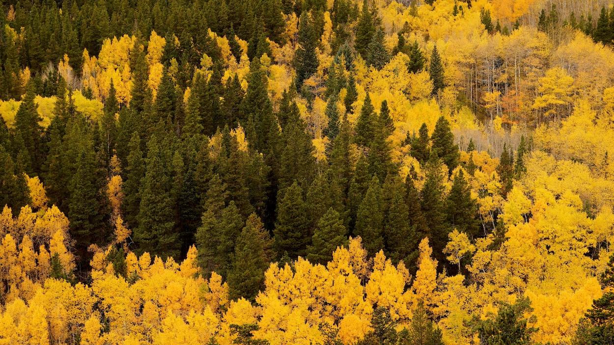 Deux personnes sont assises sur un rocher, au milieu d'une forêt de pins et de trembles au coeur d'une forêt du Colorado.