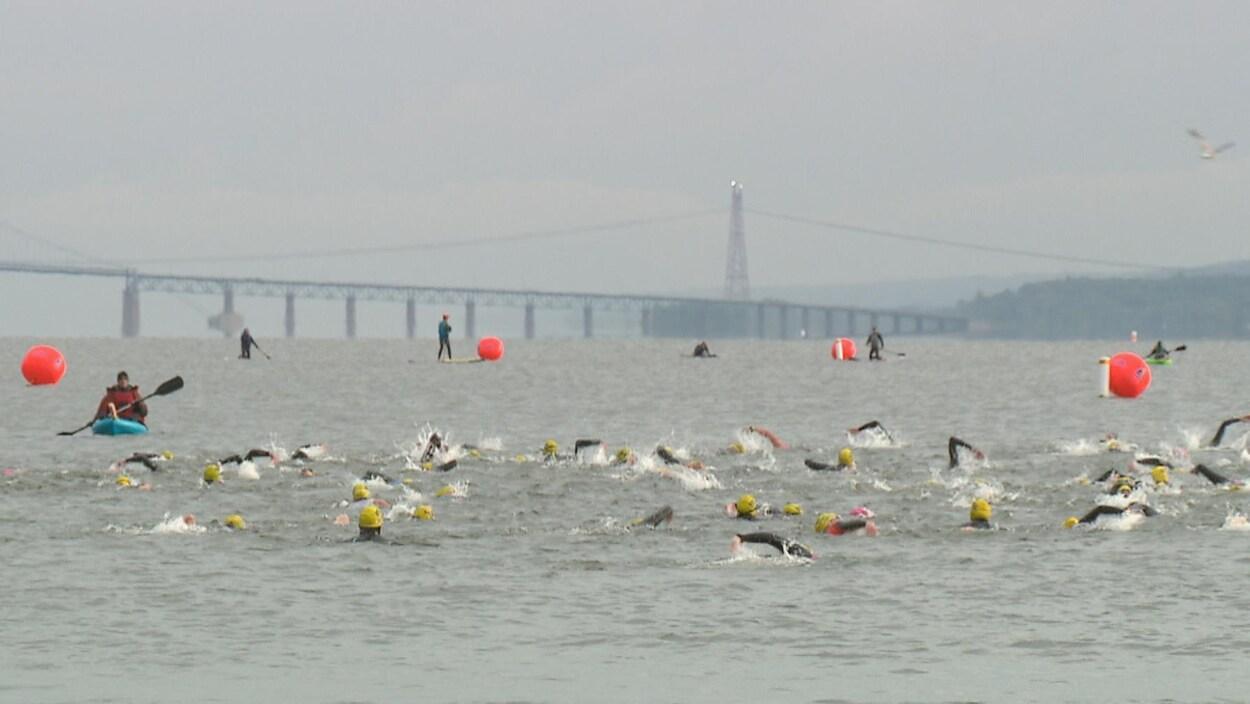 Des athlètes nagent dans le fleuve Saint-Laurent.