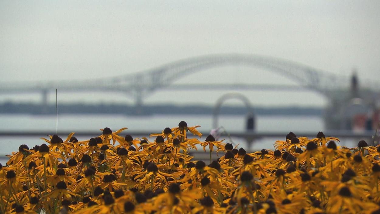 Le pont Laviolette à Trois-Rivières.
