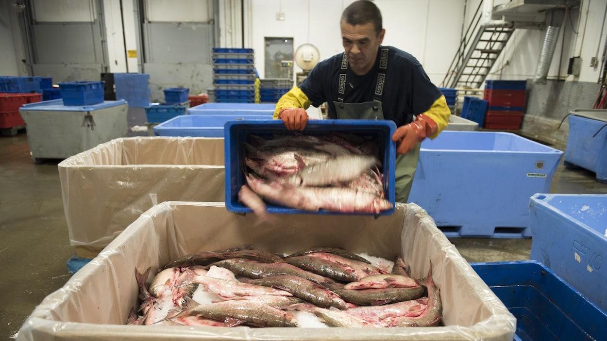 Un travailleur tient un bac rempli de poissons dans une usine.