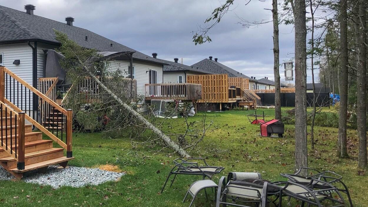 Un arbre effondré sur une résidence.