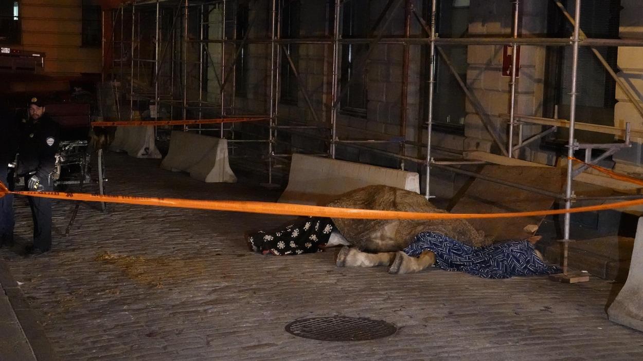 La dépouille d'un cheval est recouverte de couvertures, dans une rue du Vieux-Montréal