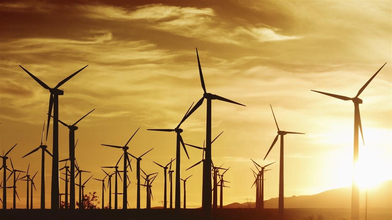Un champs d'éoliennes