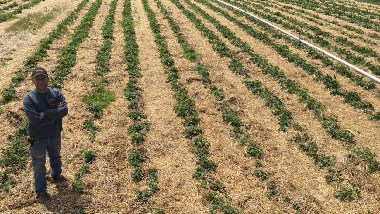 Un fermier seul dans un champ de semences.