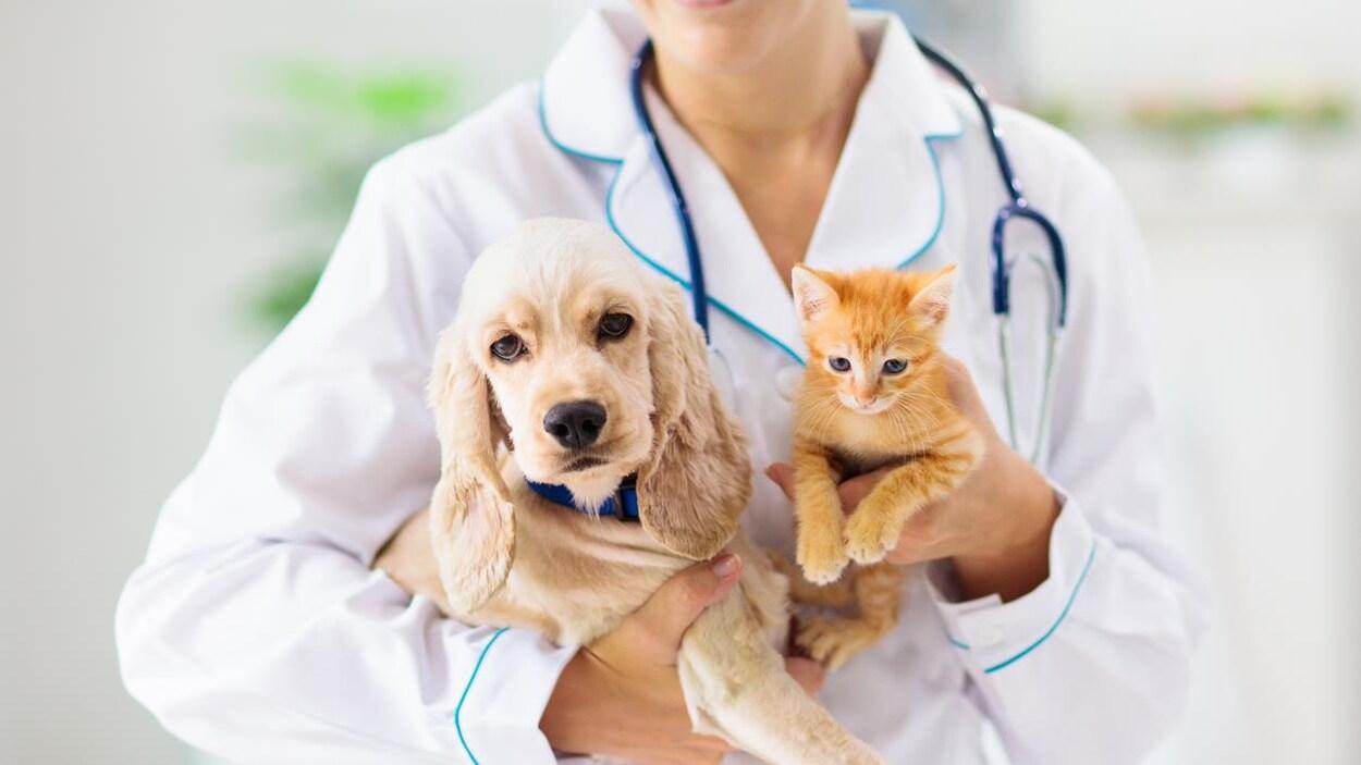 Une vétérinaire tient dans ses bras un chiot et un chaton.