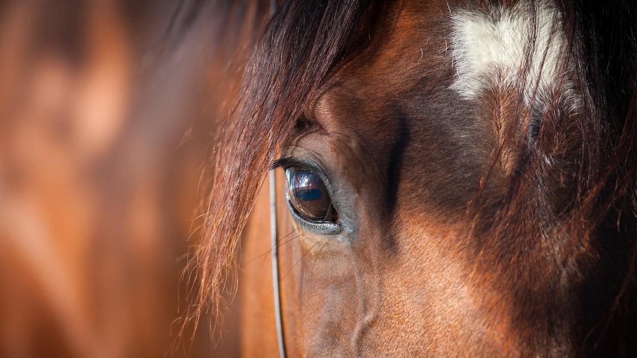 Les animaux de la ferme, comme le cheval, sont plus dangereux pour l'homme que les bêtes sauvages.