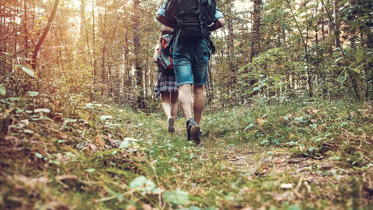 Des randonneurs marchent dans une forêt.